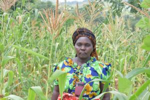 The Water Project:  Agnes Stands Amid Her Growing Maize