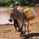 The Water Project: Kathuli Community A -  Donkey