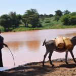 The Water Project: Kathuli Community A -  Donkey Loaded With Water To Carry Home