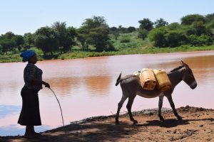 The Water Project:  Donkey Loaded With Water To Carry Home
