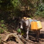 The Water Project: Tulimani Community A -  Donkey For Hauling Water