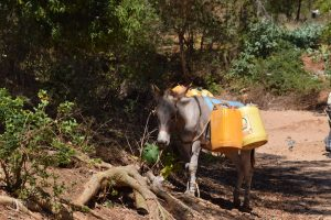 The Water Project:  Donkey For Hauling Water