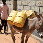 The Water Project: Kyamatula Secondary School -  Donkey Gets Ready To Go Fetch Water