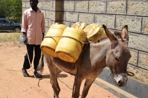 The Water Project:  Donkey Gets Ready To Go Fetch Water