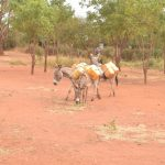 The Water Project: Kamulalani Primary School -  Donkeys Return With Water