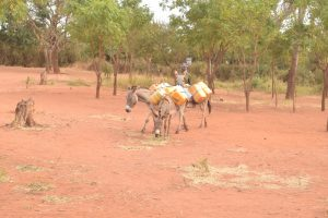 The Water Project:  Donkeys Return With Water