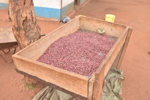 The Water Project:  Sorted Beans For Cooking