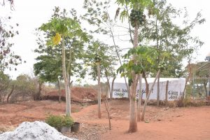 The Water Project:  Mango Trees