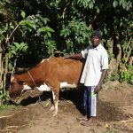 The Water Project: Bungaya Community, Charles Khainga Spring -  Kevin Omondi With His Cow