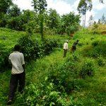 The Water Project: Kapsambo Community, Muhingi Spring -  Path To The Spring
