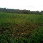The Water Project: Bungonye Community, Shilangu Spring -  Sugarcane Farm