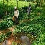 The Water Project: Kapsambo Community, Muhingi Spring -  Going To Fetch Water