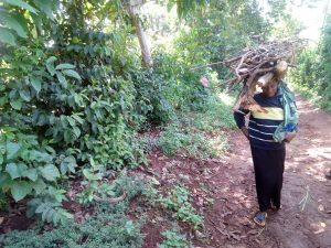 The Water Project:  Woman Carrying Firewood Home