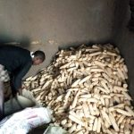 The Water Project: Buhayi Community, Nasichundukha Spring -  Maize Used As Firewood