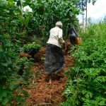 The Water Project: Kapsambo Community, Muhingi Spring -  Carrying Water