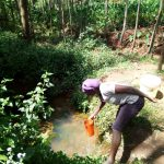 The Water Project: Hirumbi Community, Khalembi Spring -  Fetching Water