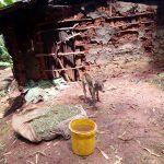The Water Project: Mushina Community, Shikuku Spring -  Calf