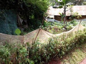 The Water Project:  Garden