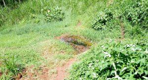 The Water Project:  Shikuku Spring