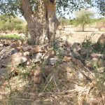 The Water Project: Kaukuswi Community -  Rocks Collected For Construction