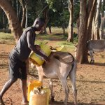 The Water Project: Kangalu Community -  Loading Water Onto Donkey