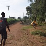 The Water Project: Kangalu Community -  Taking Water Home