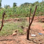 The Water Project: Kangalu Community A -  Livestock Shelter