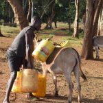 The Water Project: Kangalu Community A -  Loading Water Onto Donkey