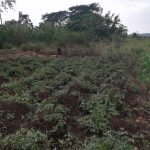 The Water Project: Nyakasenyi Byebega Community -  Farm