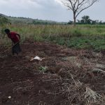 The Water Project: Nyakasenyi Byebega Community -  Working The Field