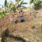 The Water Project: Kimigi Kyamatama Community -  Farming