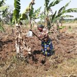 The Water Project: Kimigi Kyamatama Community -  Working Farm