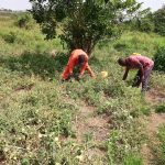 The Water Project: Kikube Nyabubale Community -  Garden