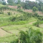 The Water Project: Buyangu Community, Osundwa Spring -  Community Landscape