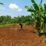 The Water Project: Ebutindi Community, Esilaba Anjere Spring -  Preparing Land For Tilling