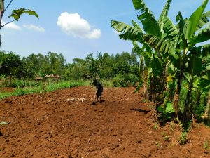 The Water Project:  Preparing Land For Tilling