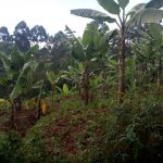 The Water Project: Kisasi Community, Edward Sabwa Spring -  Banana Farm