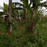 The Water Project: Jivuye Community, Wasiva Spring -  Community Landscape