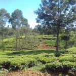 The Water Project: Lusiola Community, Ifetha Spring -  Community Landscape