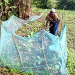 The Water Project: Shikangania Community, Abungana Spring -  Farming