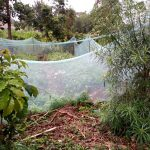 The Water Project: Kisasi Community, Edward Sabwa Spring -  Mosquito Net Fence