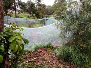 The Water Project:  Mosquito Net Fence