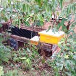 The Water Project: Jivuye Community, Wasiva Spring -  Bee Hives