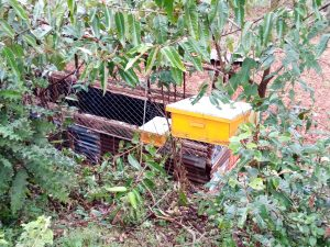 The Water Project:  Bee Hives