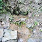 The Water Project: Jivuye Community, Wasiva Spring -  Current Water Source