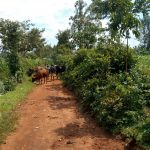 The Water Project: Chiliva Primary School -  Path To The Spring