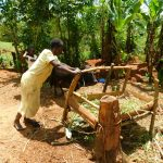 The Water Project: Ebutindi Community, Tondolo Spring -  Feeding The Family Cow