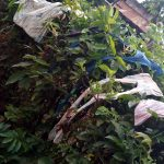 The Water Project: Bumira Community, Imbwaga Spring -  Clothes Drying On The Bushes