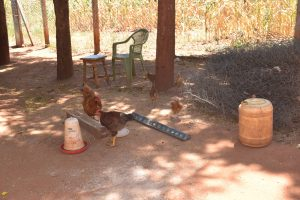 The Water Project:  Chickens In Compound