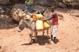 The Water Project:  Donkey Carrying Water